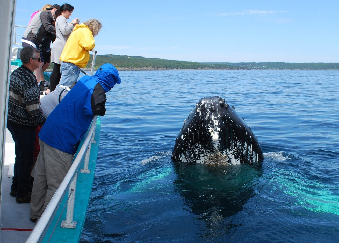 Surreal closeness with whales in Newfoundland