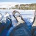 snowshoeing in newfoundland
